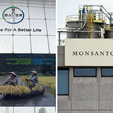 Monsanto y Bayer negocian pacto