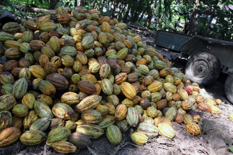 el cacao dating site Cacao use and the san lorenzo olmec  on the pacific coast and the olmec site of el manatí on the gulf coast until now, comparable evidence from san lorenzo, the pre-  dating from 1900.