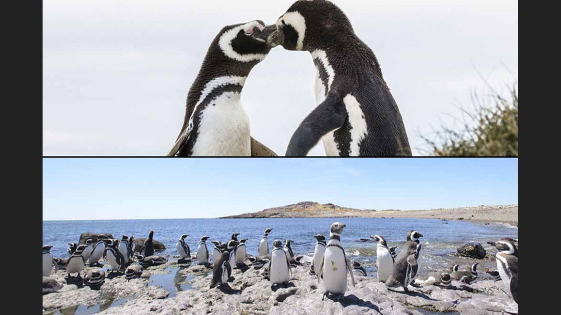 25 abril día mundial del pingüino, #worldpenguinday