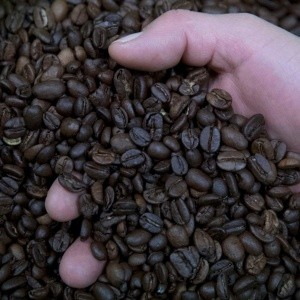 Instituto Poblano del Café busca beneficiar a 700,000 productores