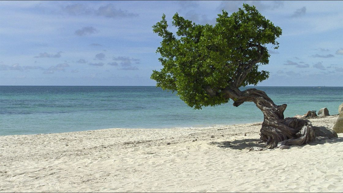 Eagle Beach. Palm/Eagle Beach, Aruba. Foto: Flickr / Serge Melki.