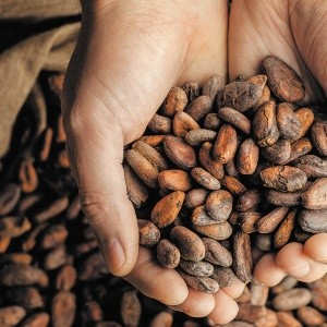 La red de valor cacao: una oportunidad de negocio